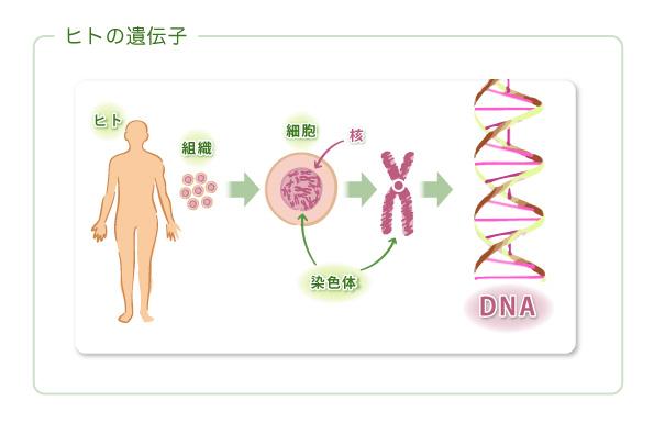 遺伝子とは